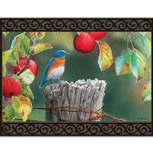 orchard bluebird